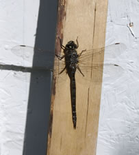 21-07-15-dragon-fly-6